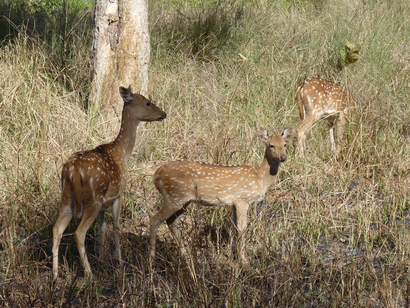 Panna National Park en Inde